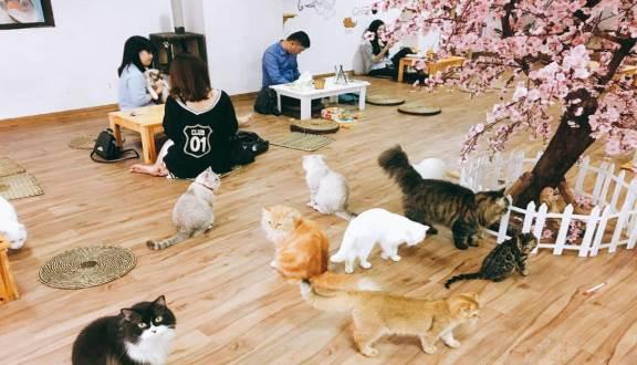 ca-phe-meo Bí quyết kinh doanh quán cafe hiệu quả 90% khách sẽ quay lại Quản lý cafe    Manage.vn